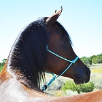 Rope Halter Kits